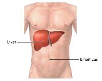 ハーブヨガ自然療法:内臓を癒す肝・腎・脾の手当て