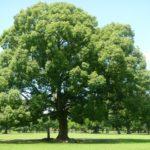動画でわかる姿勢美法:木の呼吸法