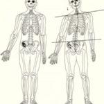 歯の健康状態やかみ合わせと姿勢の関係 【歪みと対話する10の方法】その1