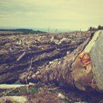 どうして、ハーブヨガは地球環境に配慮するヨガなのですか?