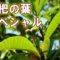 枇杷の葉スペシャルハーブボール